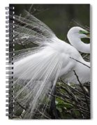 Great Egret Preening Spiral Notebook