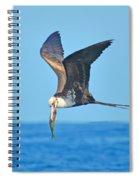 Great Frigate Bird Spiral Notebook