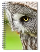 Great Gray Owl Close Up Spiral Notebook