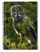 Great Grey Owl On The Hunt Spiral Notebook