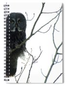 Great Grey Owl On The Lookout Spiral Notebook