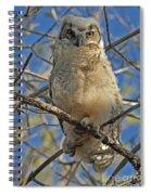 Great Horned Owl 2 Spiral Notebook