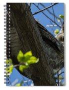 Great Horned Owl 5 Spiral Notebook