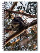 Great Horned Owl Looking Down  Spiral Notebook