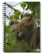 Great Horned Owlets 5 20 2011 Spiral Notebook
