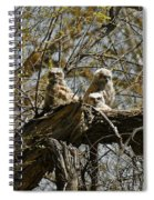 Great Horned Owlets Photo Spiral Notebook