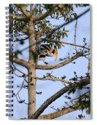 Great Indian Hornbill Spiral Notebook