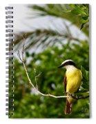 Great Kiskadee Spiral Notebook