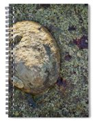Great Owl Limpet Spiral Notebook