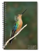Great Sapphirewing Spiral Notebook