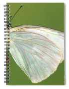 Great Southern White Butterfly Spiral Notebook