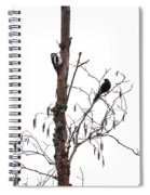 Great Spotted Woodpecker And A Blackbird. Dude What Are You Doing Spiral Notebook
