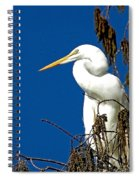 Great White Curves Spiral Notebook