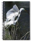 Great White Egret Building A Nest V Spiral Notebook