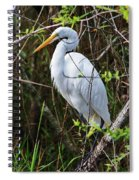 Great White Egret In The Wild Spiral Notebook