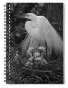 Great White Egret Mom And Chicks In Black Ans White Spiral Notebook