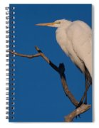 Great White Egret On A Snag Spiral Notebook