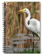 Great White Egret Taking A Stroll Spiral Notebook