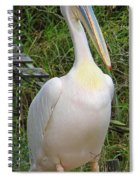 Great White Pelican Spiral Notebook