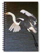 Greater Egret Landing Spiral Notebook