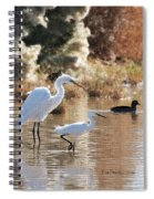 Greater Egret Lesser Egret And Coot Spiral Notebook