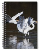 Greater Egrets Meet Up  Spiral Notebook