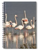 Greater Flamingos At Laguna De La Fuente De Piedra Spiral Notebook