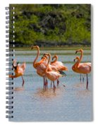 Greater Flamingos Spiral Notebook