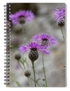 Greater Knapweed Spiral Notebook