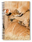 Greater Kudu Mother And Baby Spiral Notebook