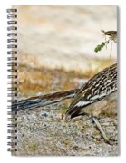 Greater Roadrunner With Nest Material Spiral Notebook