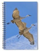 Greater Sandhill Cranes In Flight Spiral Notebook