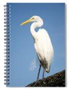 Greater White Egret Spiral Notebook