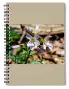 Greek Valerian 3 Spiral Notebook
