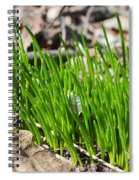 Green And Fresh Spiral Notebook