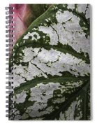 Green And Pink Caladiums Spiral Notebook