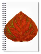 Green And Red Aspen Leaf 3 Spiral Notebook