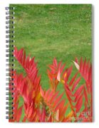Green And Red Spiral Notebook
