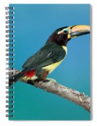 Green Aracari On Branch Spiral Notebook