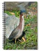 Green-backed Heron Butorides Virescens Spiral Notebook