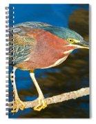 Green-backed Heron Spiral Notebook