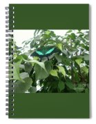 Green Banded Butterfly Spiral Notebook