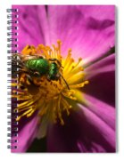 Green Bee Feeding On Rock Rose Spiral Notebook