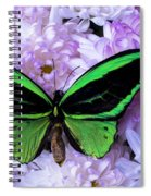 Green Butterfly And Mums Spiral Notebook
