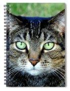 Green Cat Eyes In Summer Grass Spiral Notebook