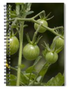 Green Cherry Tomatoes On The Vine Spiral Notebook
