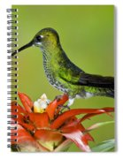 Green-crown Brilliant Female Spiral Notebook