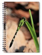 Green Dragonfly On Grass Square Spiral Notebook