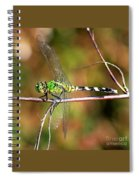 Green Dragonfly On Twig Square Spiral Notebook