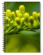 Green Dream Wandering Spiral Notebook